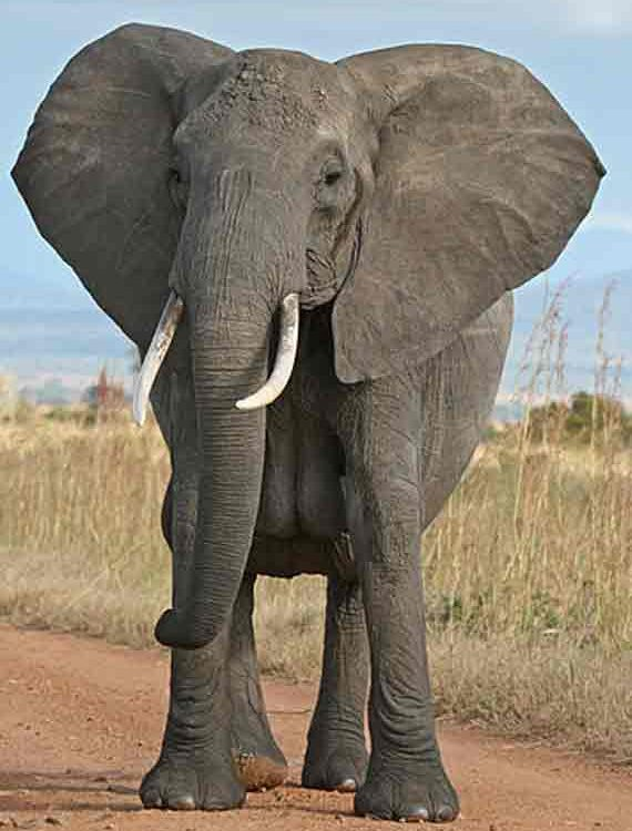 Point of View The Elephant Story